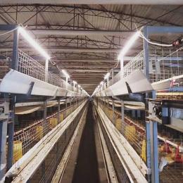 Farming factory lightingapplication-waterproof tube